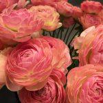花はなのテーマ『花』